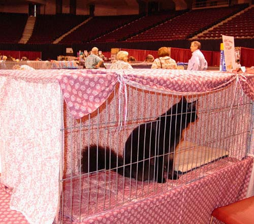 Cat Products and Designs - Cage Curtains - Nacada Cattery, Home of